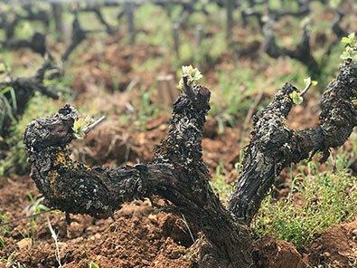 Natural Wine?